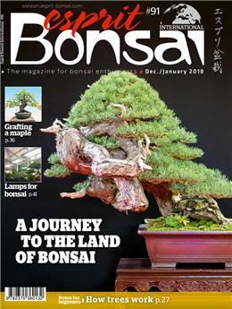 Esprit Bonsai International #91