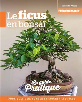 Le Ficus en bonsai